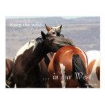 Abrazo salvaje de la yegua, con seña preimpresa: tarjeta postal