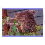 Abrazos de la koala tarjetón