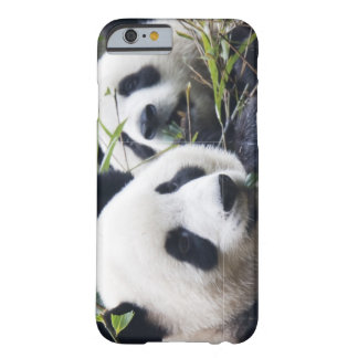 Abrazos de oso de panda funda de iPhone 6 barely there