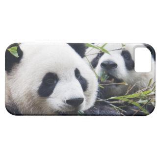 Abrazos de oso de panda iPhone 5 fundas