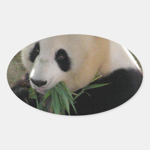Abrazos de oso de panda pegatinas oval personalizadas