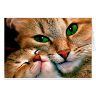 Abrazos del gato tarjeta de felicitación