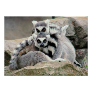 Abrazos del Lemur Poster
