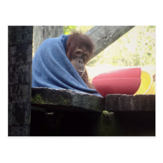 Abrazos del orangután tarjeta postal
