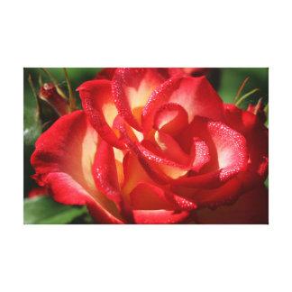 Abrigo color de rosa de la lona lienzo envuelto para galerías