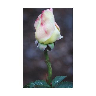 Abrigo color de rosa de la lona lienzo envuelto para galerias