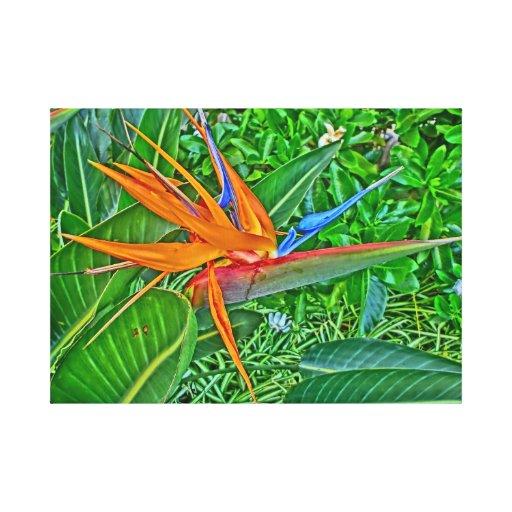 Abrigo de la lona de Hawaii del paraíso del pájaro Impresión En Lienzo