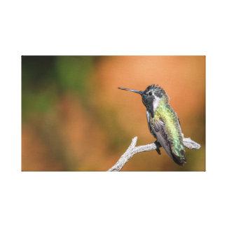 Abrigo de la lona: El colibrí #5 de la costa Impresiones En Lienzo Estiradas