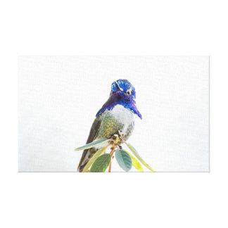 Abrigo de la lona: El colibrí de la costa Impresión En Tela