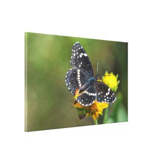 Abrigo de la lona: Mariposa confinada #3 del remie Lona Envuelta Para Galerías