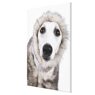 Abrigo de pieles que lleva del perro de Whippet, Impresion En Lona