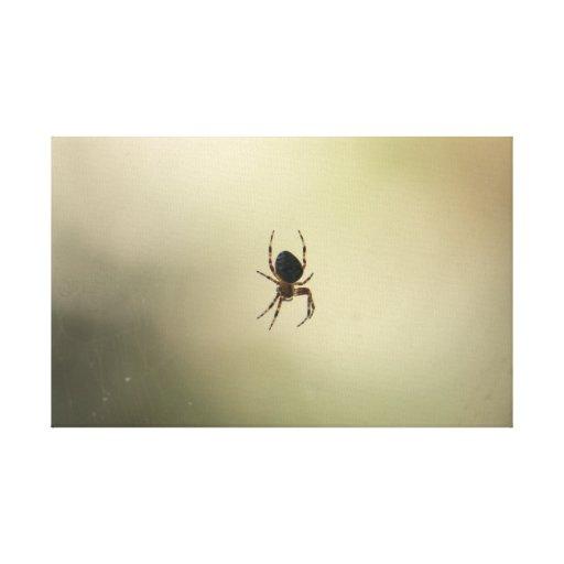 Abrigo espeluznante de la lona de la araña impresiones en lona