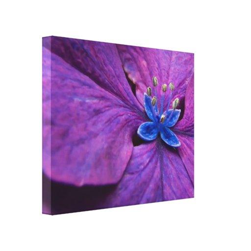 Abrigo púrpura y azul de la lona del primer del Hy Lona Estirada Galerías