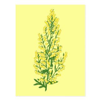 Absinthium Flowers Postcard