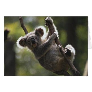 Absolutely Adorable Koala Bear Card