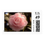 """Absolutely Flawless Pink Camellia"" Postage Stamp"