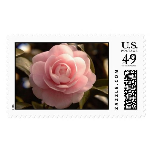 """""""Absolutely Flawless Pink Camellia"""" Postage Stamp"""