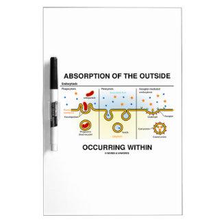 Absorción del exterior que ocurre dentro tablero blanco