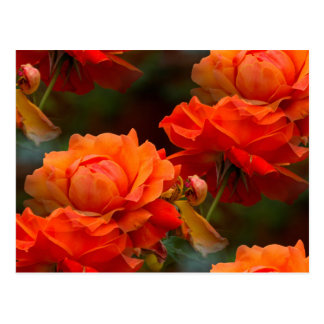 abstrac roses postcard