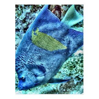 Abstract Angel Fish Postcard
