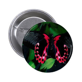 Abstract Animal Elegant Butterfly Pinback Button