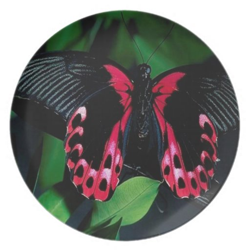 Abstract Animal Elegant Butterfly Dinner Plate