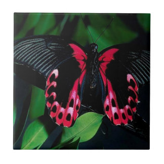 Abstract Animal Elegant Butterfly Ceramic Tiles