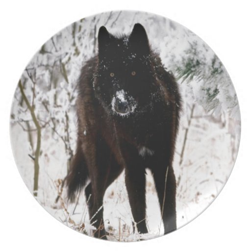 Abstract Animal Winter Wolf Hound Party Plates