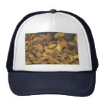 Abstract Beech and oak leaves in ice Hat