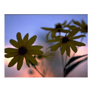 Abstract Black-eyed Susans Postcard
