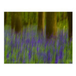 Abstract Bluebell Woods Post Card