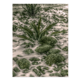 Abstract Century Cactus in Snow Postcard