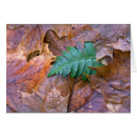 Abstract Christmas fern and autumn leaves Greeting Card