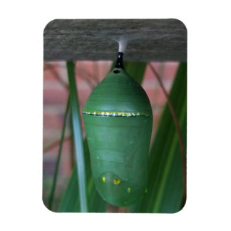Abstract Chrysalis of the Monarch Butterfly Magnet