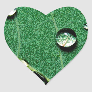 abstract colors raindrops on a fallen leaf.jpg heart sticker