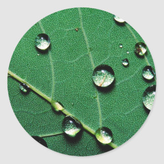 abstract colors raindrops on a fallen leaf.jpg classic round sticker