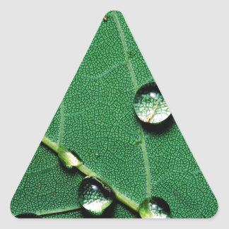 abstract colors raindrops on a fallen leaf.jpg triangle sticker