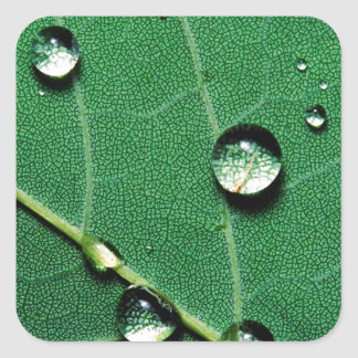 abstract colors raindrops on a fallen leaf.jpg square sticker