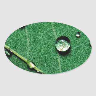 abstract colors raindrops on a fallen leaf.jpg oval sticker