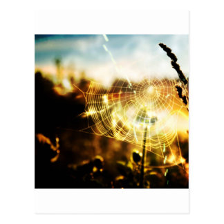 Abstract Cool Wheat Webs Of Fire Postcard