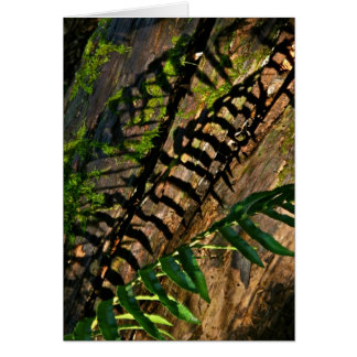 ABSTRACT DESIGN WITH FERNS AND SHADOWS CARD