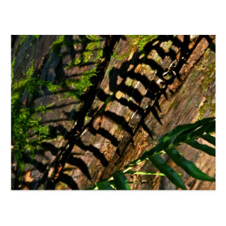 ABSTRACT DESIGN WITH FERNS AND SHADOWS POSTCARD