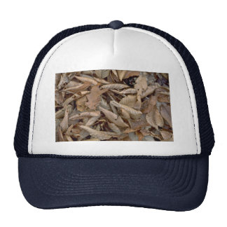 Abstract Dried beech, maple and oak leaves on the Mesh Hats