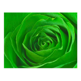 Abstract Emerald Green Rose Center Photograph Post Card