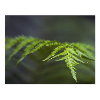Abstract Fern detail Postcard