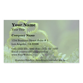 Abstract Ferns Double-Sided Standard Business Cards (Pack Of 100)