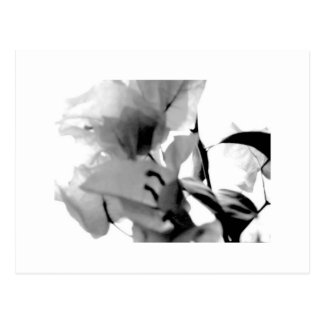 Abstract Floral, Black and White Postcard