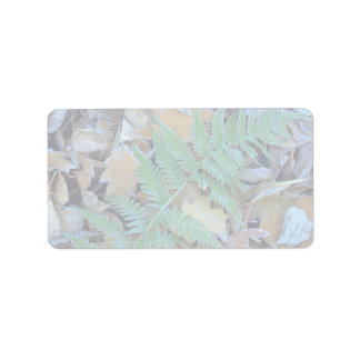 Abstract Frost-covered fern on the forest floor Label
