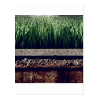 Abstract Garden Greener Grass Other Side Postcard