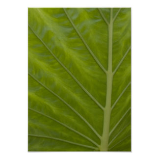Abstract Green Leaf Poster